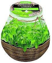 Düfte, Parfümerie und Kosmetik Duftkerze im Glas Citronella Garden Basilic 94/91 mm - Bolsius Candle