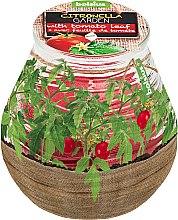Düfte, Parfümerie und Kosmetik Duftkerze im Glas Citronella Garden Tomato Leaf 94/91 mm - Bolsius Candle