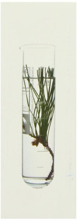 Straffendes Anti-Falten-Serum - Korres Black Pine Antiwrinkle, Firming & Lifting Serum — Bild N3
