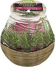 Düfte, Parfümerie und Kosmetik Duftkerze im Glas Citronella Garden Rosemary 94/91 mm - Bolsius Candle