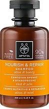 Düfte, Parfümerie und Kosmetik Reparierendes und pflegendes Shampoo mit Olive und Honig - Apivita Nourish And Repair Shampoo With Olive And Honey