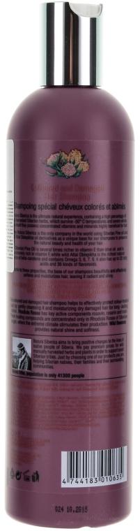 Shampoo für coloriertes und strapaziertes Haar - Natura Siberica — Bild N2